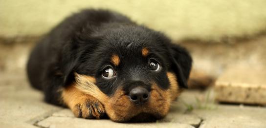 犬の叱り方